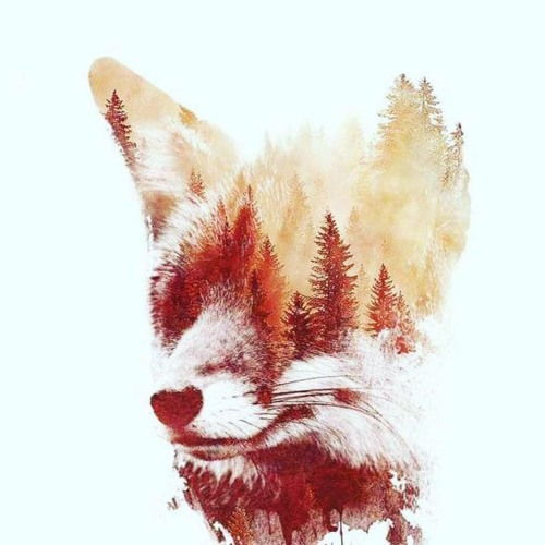Cardboard Foxes's avatar