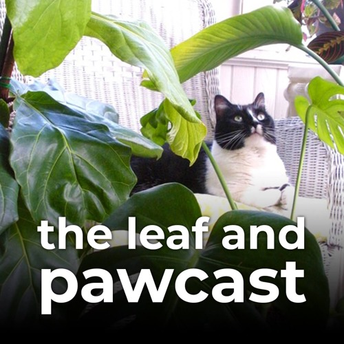 Leaf and Paw's avatar