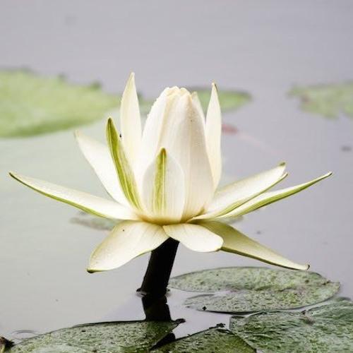 Chicago Zen Meditation Community's avatar