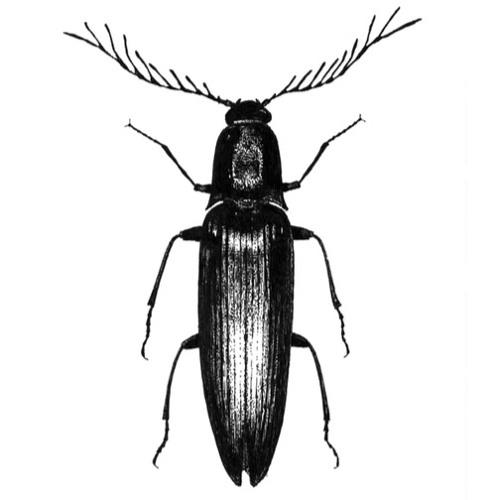 AARNISEPPÄ's avatar