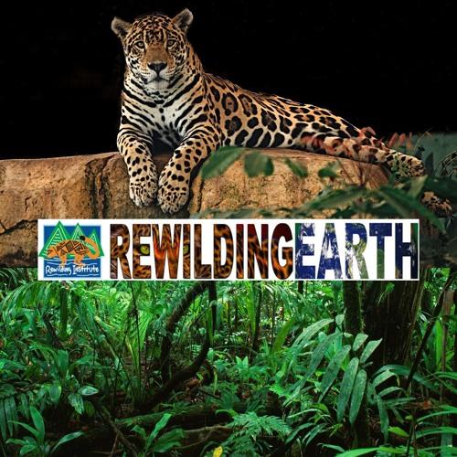 Rewilding Earth's avatar