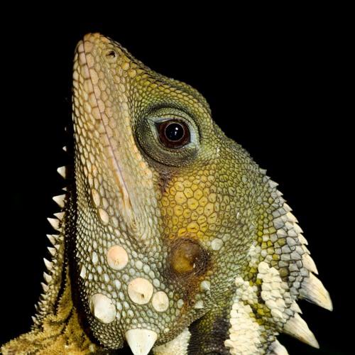 Faunaverse-Australian wildlife in poetry's avatar