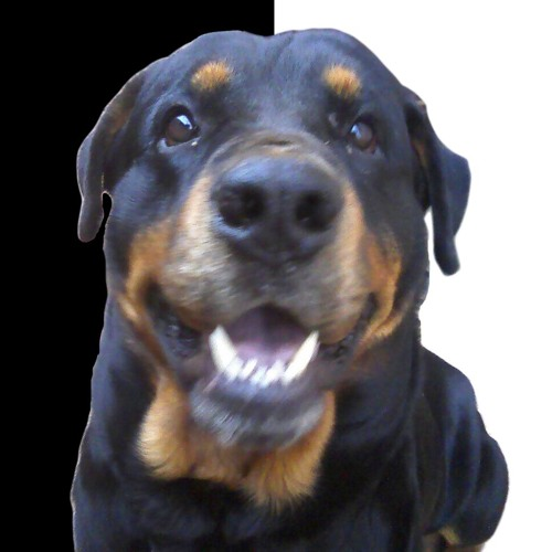 Breno Ponpeo's avatar