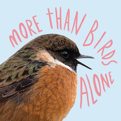 More Than Birds Alone's avatar
