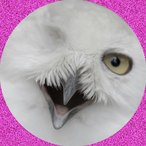 *splndr*'s avatar