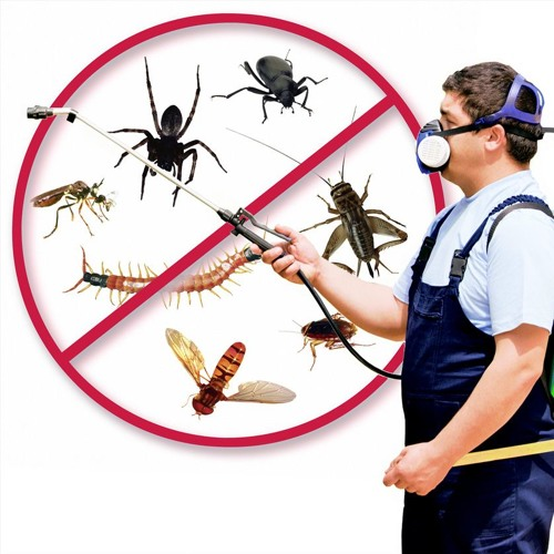 bed bug removal's avatar