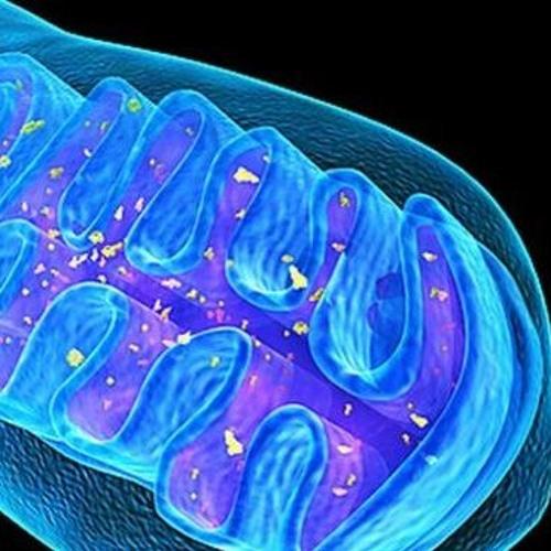 mitochondria_gang's avatar