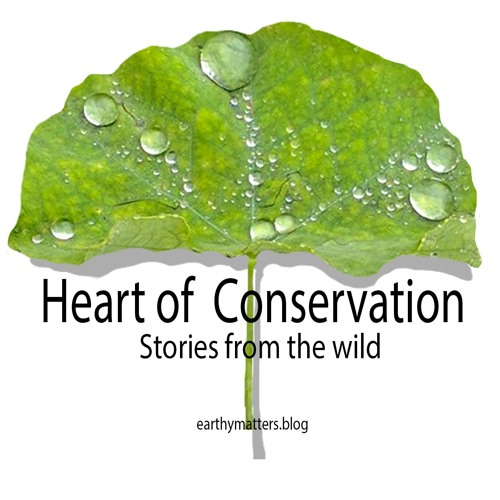 Heart of Conservation. Podcast from the Himalaya's avatar