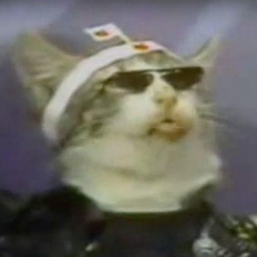 猫's avatar