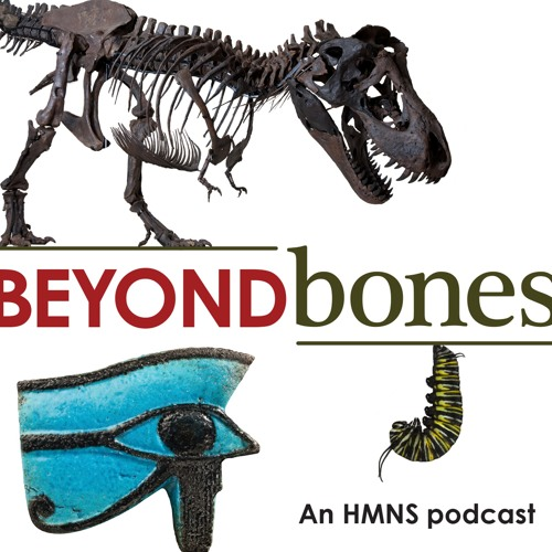 Beyond Bones: An HMNS Podcast's avatar
