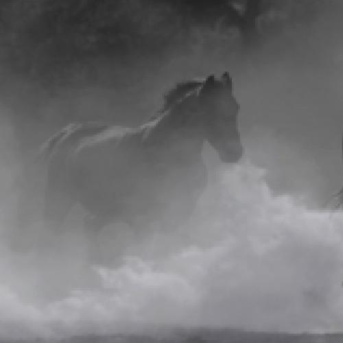Jessica Irvine / Horses's avatar