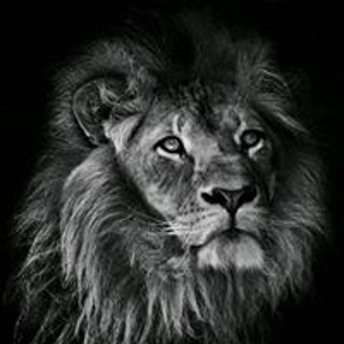Musa Mubarak's avatar