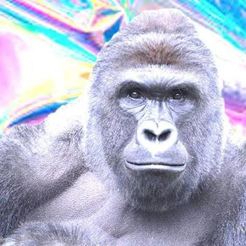 drtrance's avatar