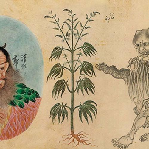 Марихуана в древности приготовить кексы с марихуаной