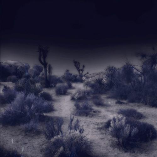 x.morganii's avatar