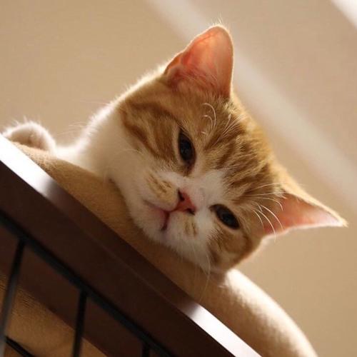cat naps's avatar