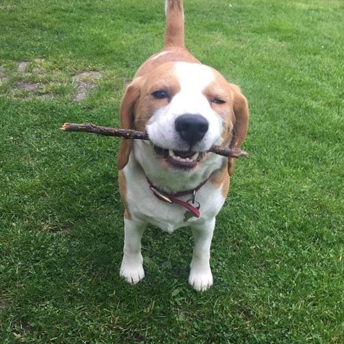 beagle's avatar