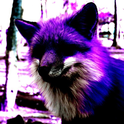 Felien's avatar