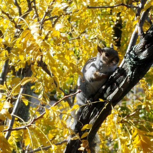 Squirrel Friend's avatar