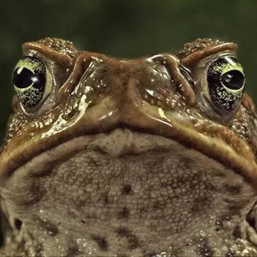 The Avarice's avatar