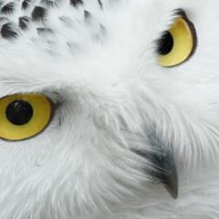 Static Owl