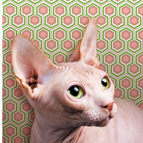 Oster Lapwass's avatar
