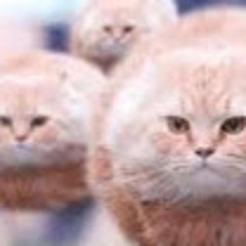 I Am Cat's avatar