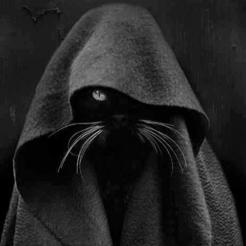 Hellnnweb's avatar