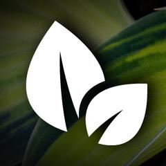 Promotion Leaf