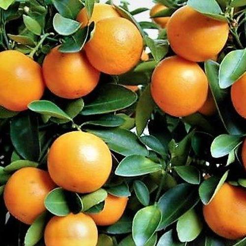 Gumquat's avatar