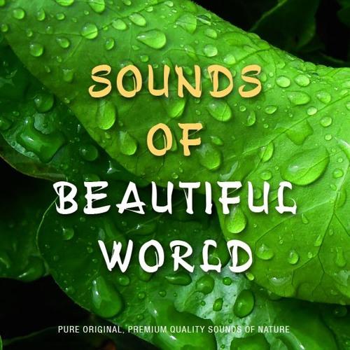 Sounds of Beautiful World's avatar