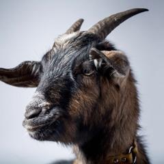 Maverick Tha Goat
