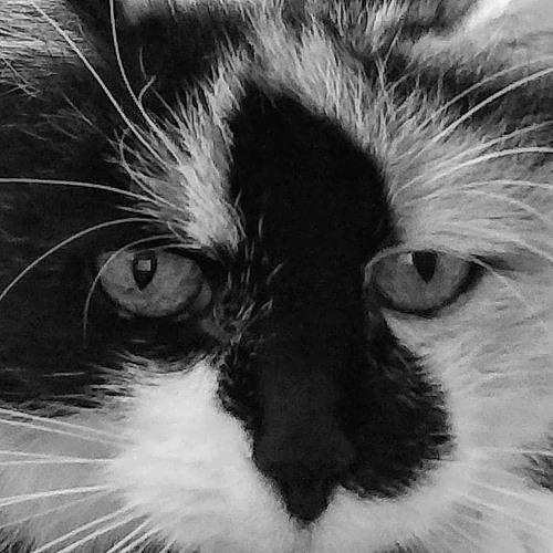 Jenny Om's avatar