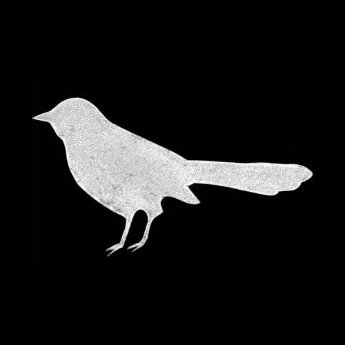 Pájaro Media's avatar
