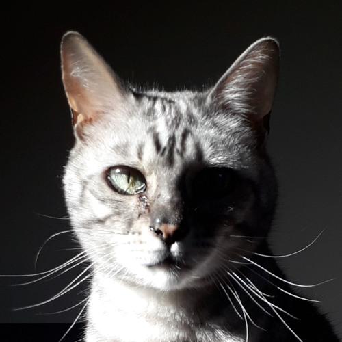S. Naomi Scott's avatar