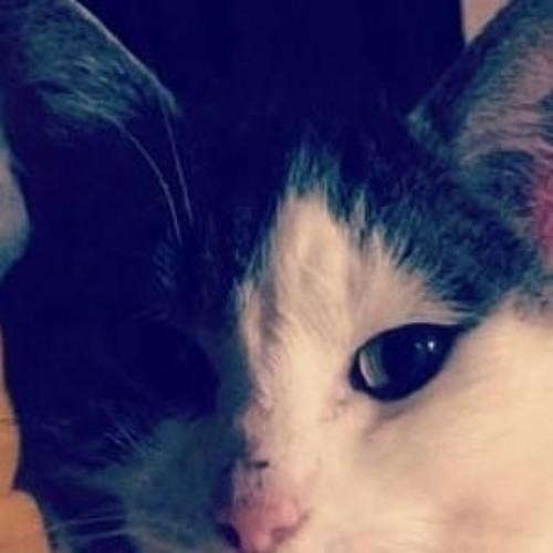 mister inco nito's avatar