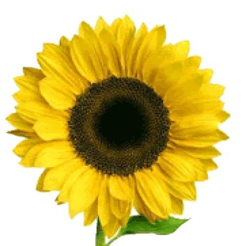 Uitgeverij Blooming's avatar