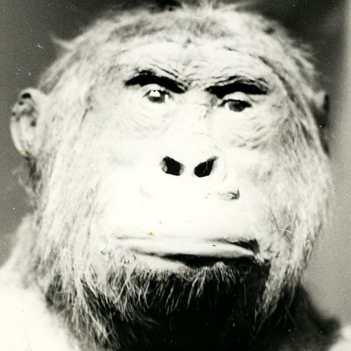 carafaja's avatar