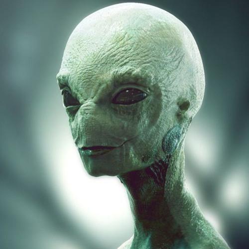 ᴡɪʟᴋʏ ᴡᴀʟᴋʏ ᴡᴏʟᴋɪ's avatar