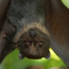 Fuzz Bat