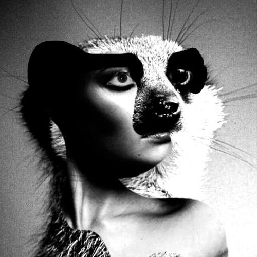 Meerkat Meerkat's avatar