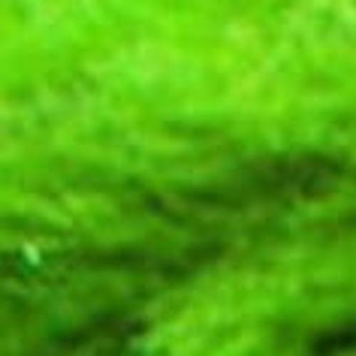 a moss ball's avatar