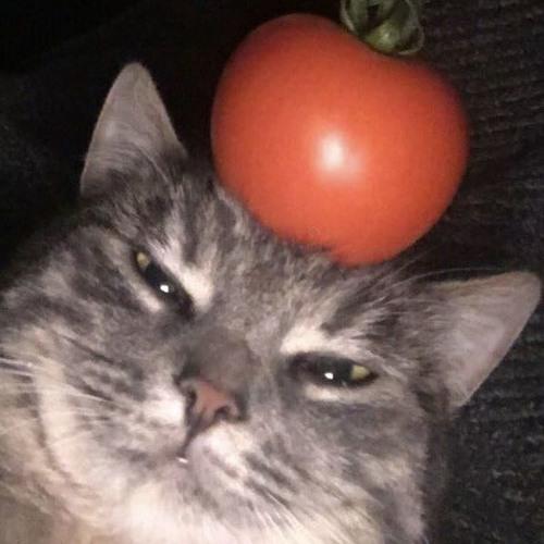 Scuffed's avatar