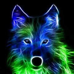 lunar wolf 803