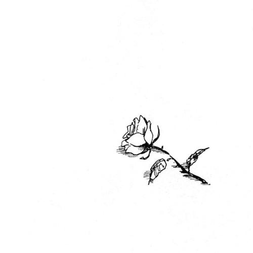 TNG's avatar