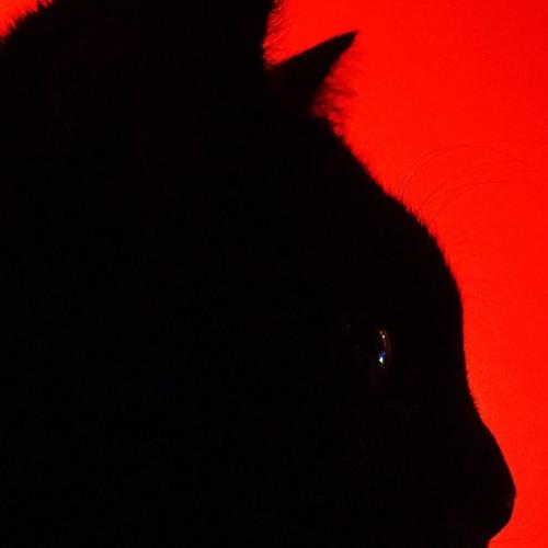 CätCät's avatar