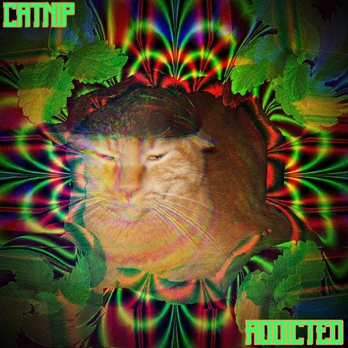 catnip_addicted's avatar