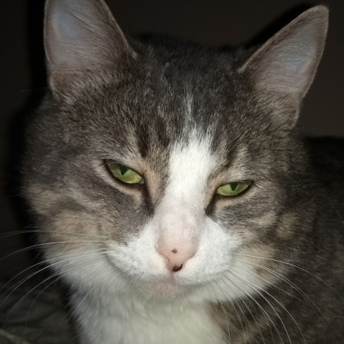 lunarcama's avatar