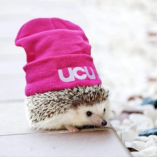 UCUBU's avatar