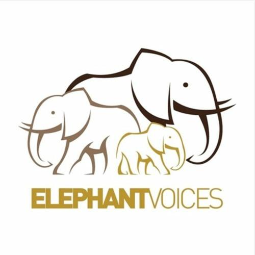 ElephantVoices's avatar